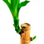 Plant shoot by Interkey Solutions
